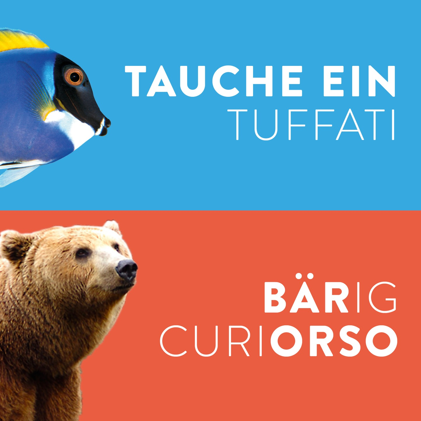 Museo / Museum branding